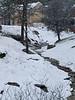 060312_3843 Seasonal creek through NC Coho
