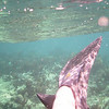Coral reef with feet, Freeport, Bahamas.
