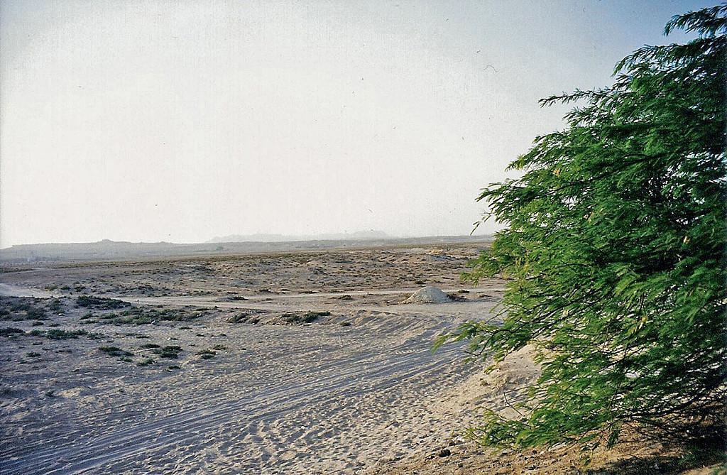Tree of Life, Bahrain 4 SM