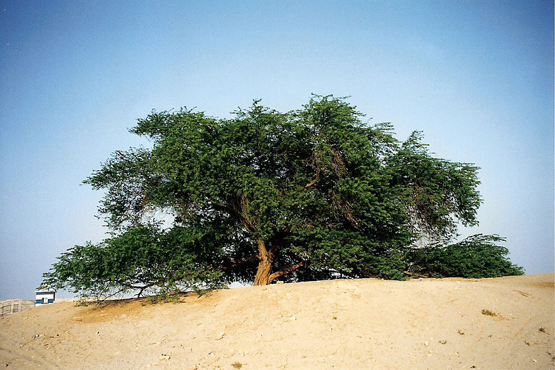 Tree of Life, Bahrain 2 SM