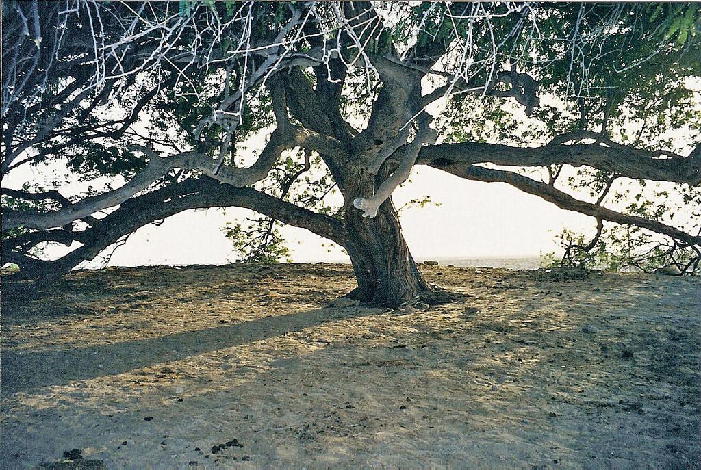 Tree of Life, Bahrain 3 SM