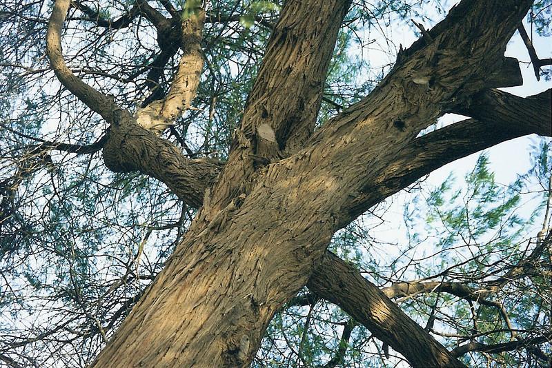 Tree of Life, Bahrain 5 SM