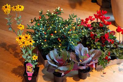 Balconies 2012 Flowers and Pumpkins