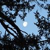 the moon at 7.30.