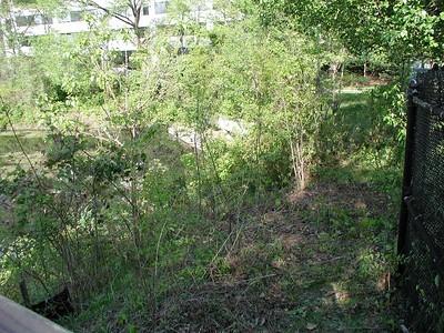 Balston Beaver Pond 2