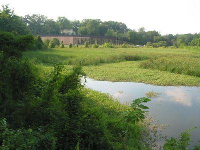 Balston Beaver Pond 4