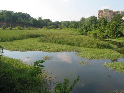 Balston Beaver Pond 5