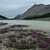 Wildflowers and lake below Columbia Icefield
