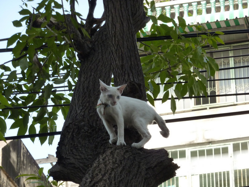 Pretty kitty in a tree, was stalking a crow