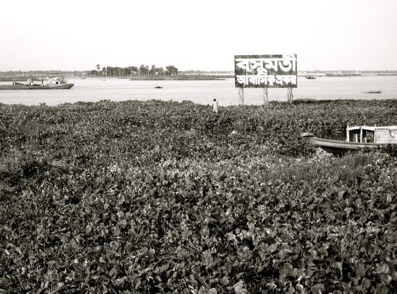 river/ wetlands behind bashundhara (my neighborhood)