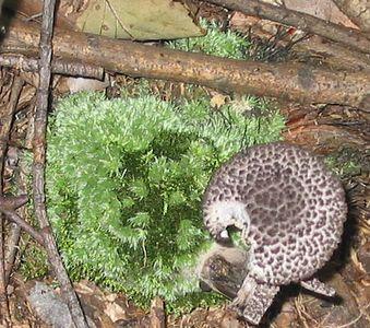 Barcroft Plant Animal etc Photo Gallery