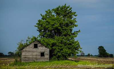 Small old barn south of Freeland, MI.