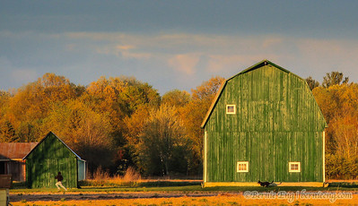 I've been watching this freshly painted Midland County green barn for months waiting for the right light. I thought the sunset this day seemed just about right even though I missed the super-dark sky behind it by a few minutes. And then the youngster and their dog saved the day! Day #75.