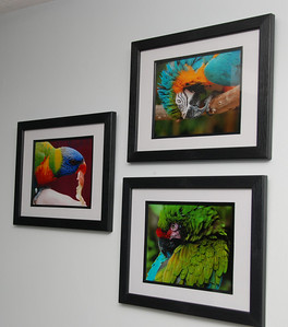 On the wall behind the sofa: Parrots at Ardastra Gardens. I also took these in the Bahamas.