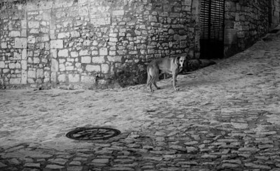 Quiet dog in the streets of Baux de Provence village, France