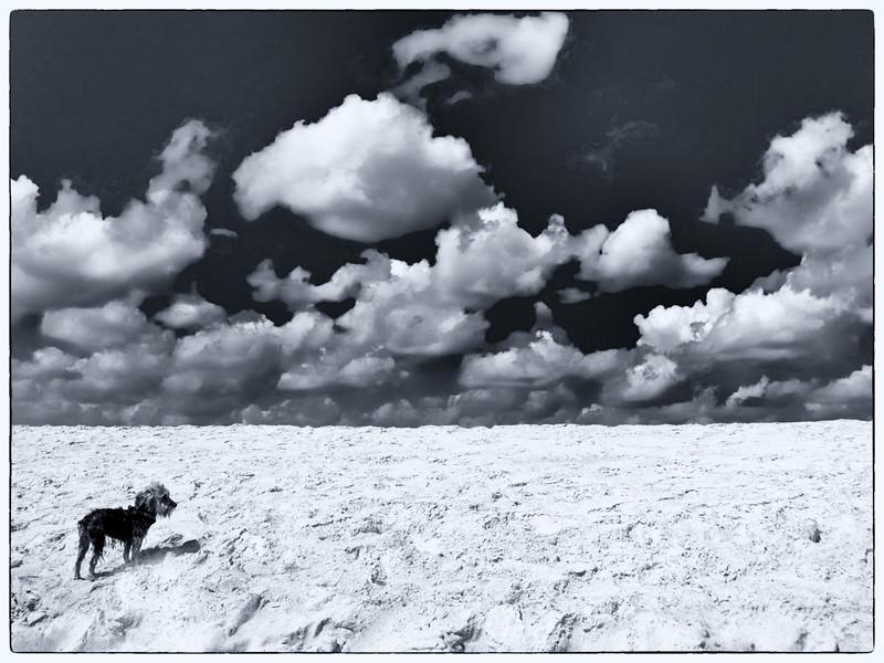 Little dog. Big beach.