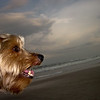 how happy?<br /> surfer-dog happy.