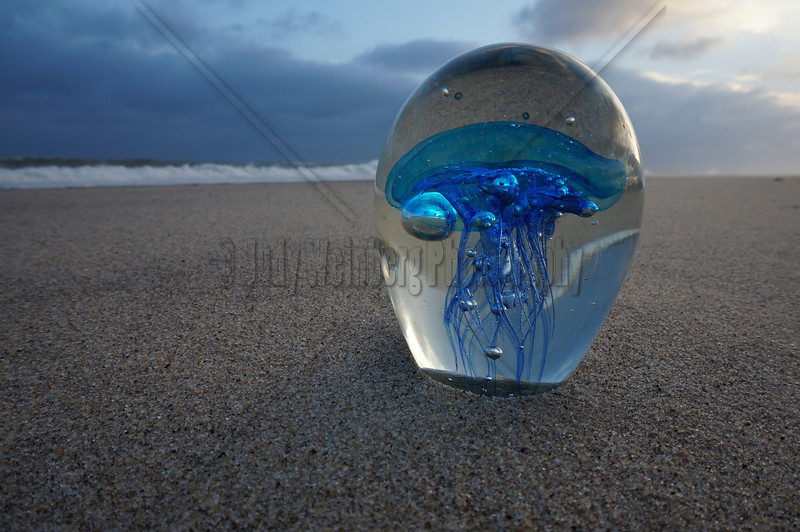 Jelly Fish in Glass on the Beach at Sunset
