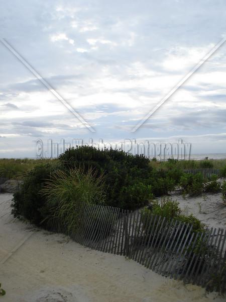 Beach Brush