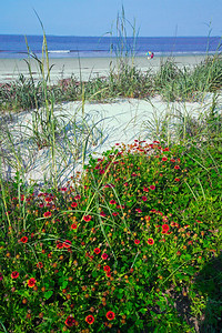 beach flowers and chairNS