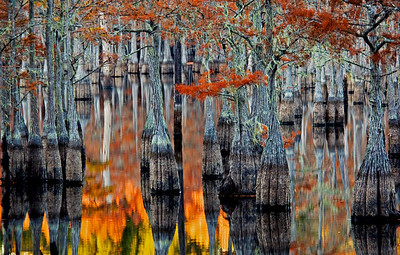 Cypress Lake in Autumn