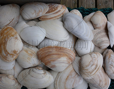 Sea Shells on Mat DSC00677