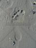 Foot Print
