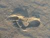 Footprint and Shadow