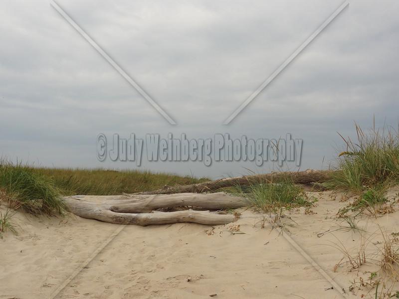Driftwood Bench