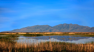 Bear River Marshes