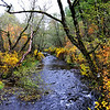 Fall colors come to Mill Creek at Tiger Canyon road, Nov 1, 2008