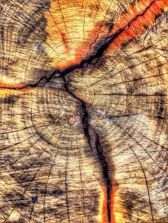 Redwood Deadwood