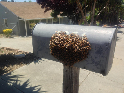anyone expecting bee delivery?
