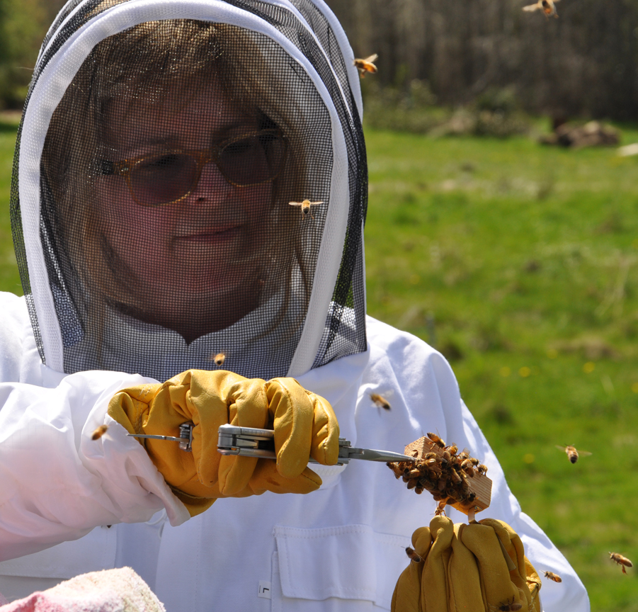 Michelle puts a marshmallow in with the Queen.  The bees eat through the marshmallow and by the time they get to her they are familiar with her pheromones.