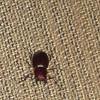 Beetle that got stuck in Ben's foot
