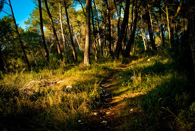 Path in the wood near St-Paul, France, French Riviera.