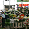 Beijing Flower Market