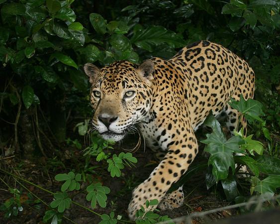 Belize- Jungle of the Maya