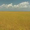 Grassy coastal plain