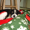 Christmas Bella (2008)