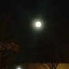 Bella's 6th FULL moon (Jan 27th 2013)