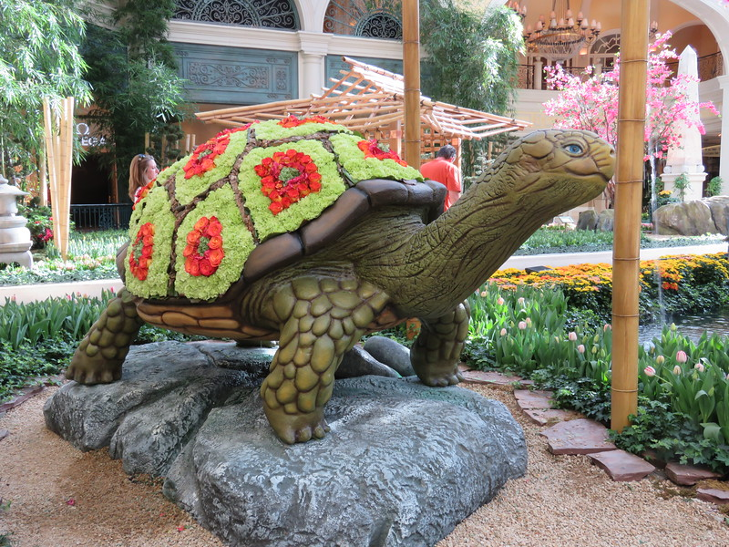 The Turtle.