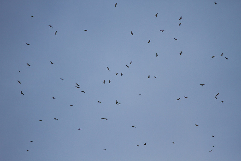 Broadwings en masse 16 September 2011