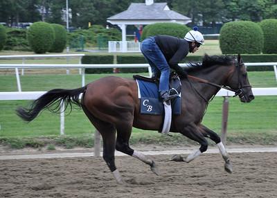 belmont horse