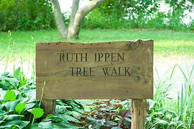 "The walkway is the ""Ruth Ippen Tree Walk""."
