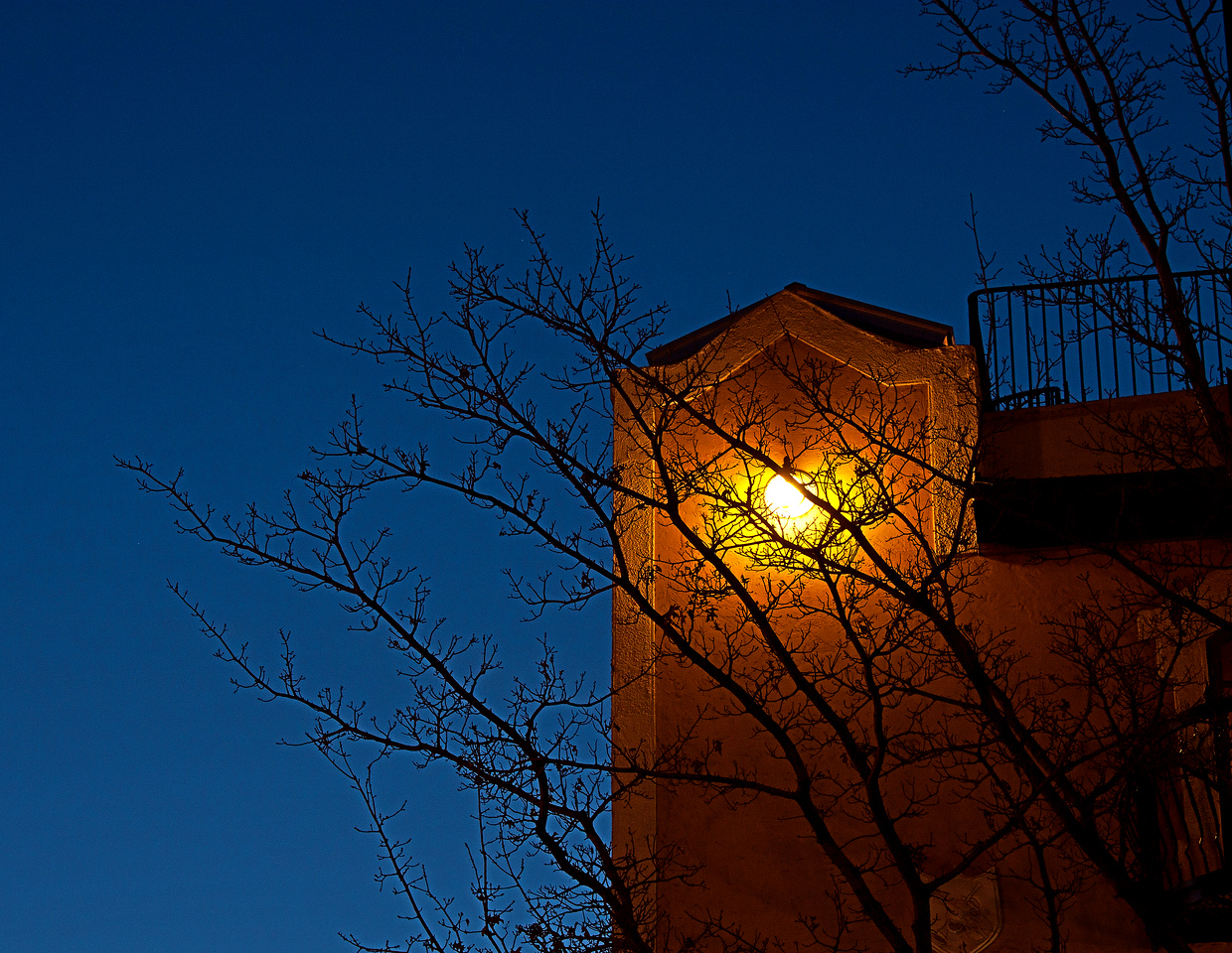 Twilight trees on a building in downtown Bend, Oregon