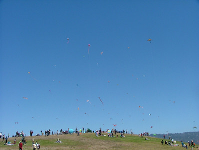 A sky full of kites