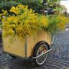 Mobile garden....