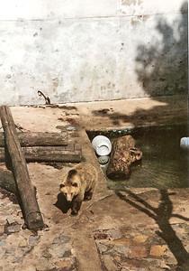 Cesky Krumlov - Bear Pit at Castle 3 SM