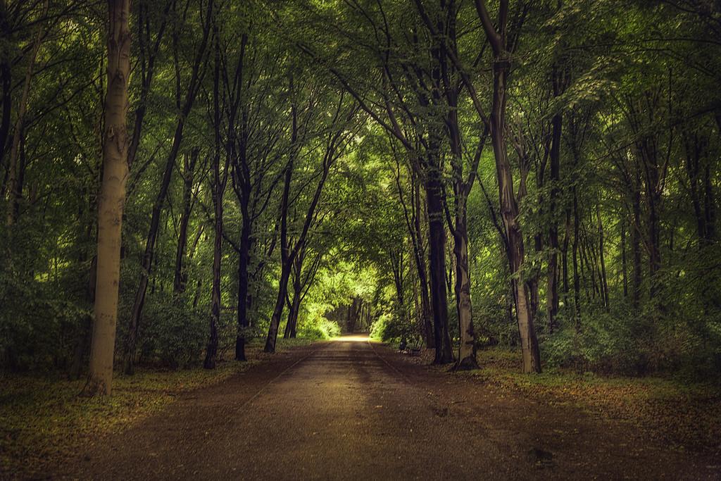 Tiergarten Path